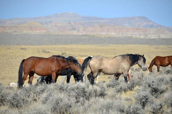 wyoming-horses